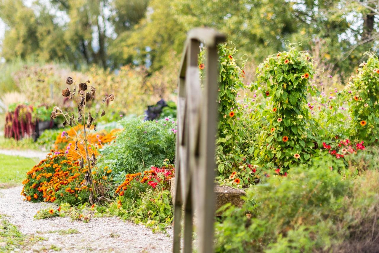 Les jardins du coeur à Yverdon