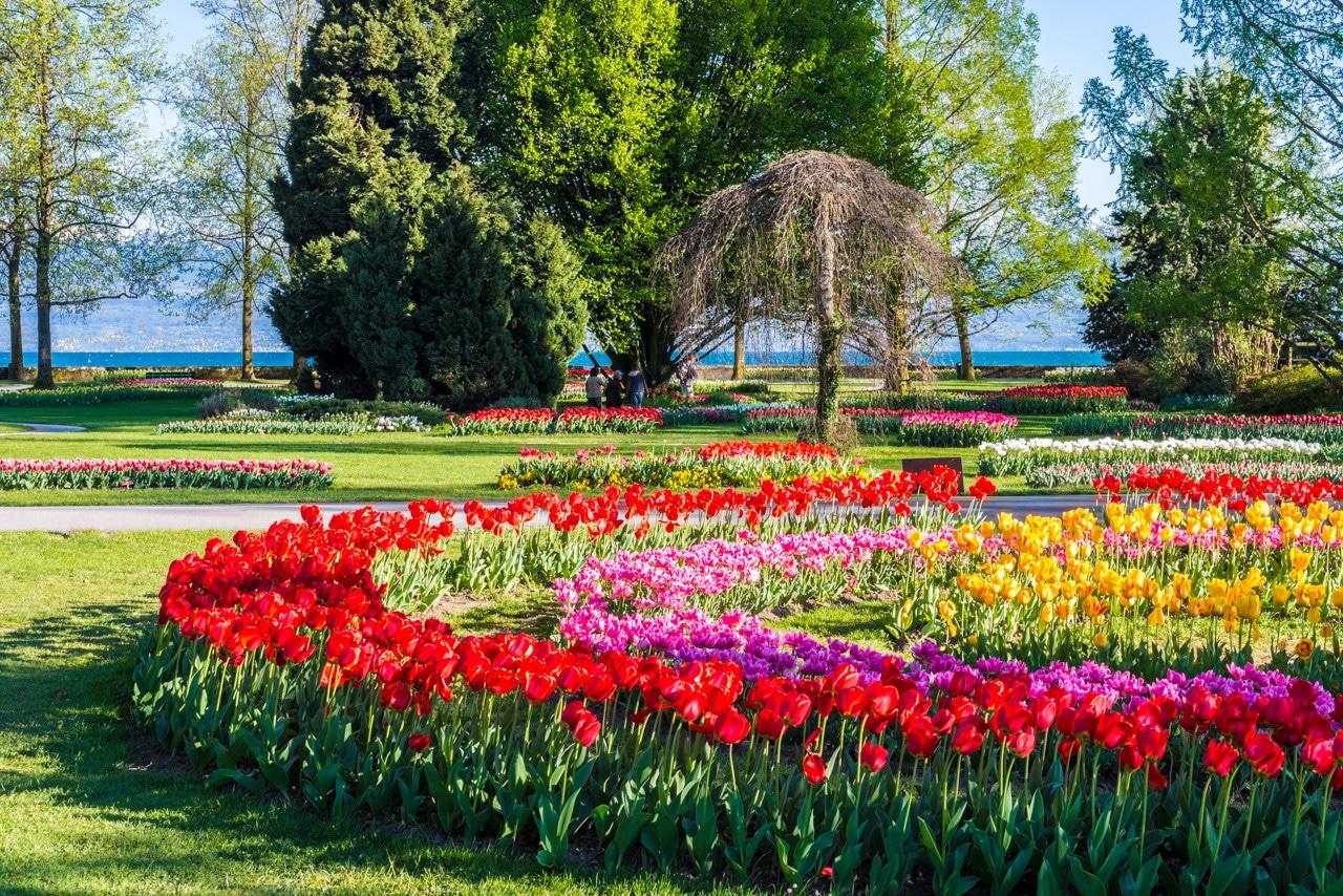 Fête des tulipes 2014