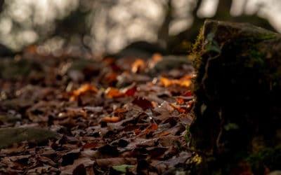 Quand la lumière met la nature en valeur