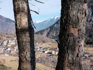 Village entre 2 arbres