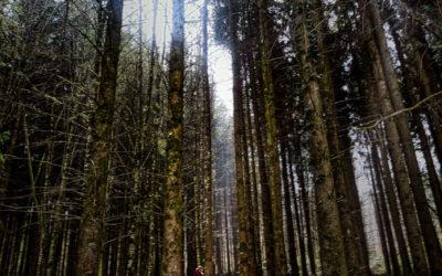Ombre et lumière en forêt