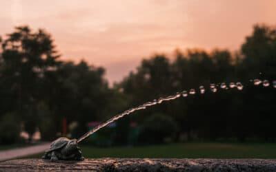 La tortue cracheuse d'eau